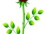Μία μέρα, ο Λάο Τσε κοντοστάθηκε, όταν είδε ένα ανθισμένο τριαντάφυλλο…